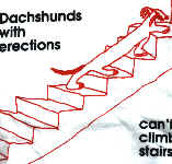 Dachshunds with Erections can't climb Stairs - XL